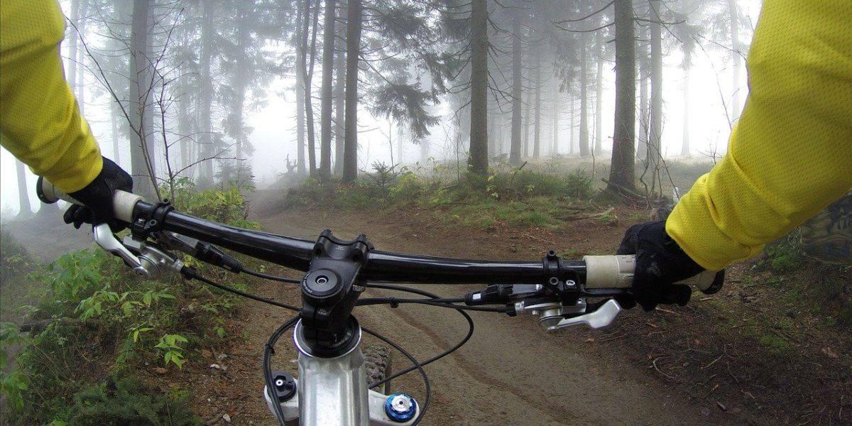 VTT en forêt à l'aube